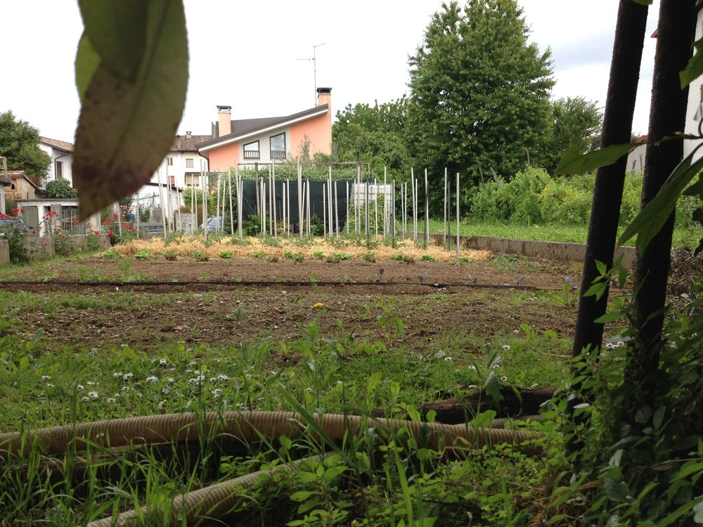 Back yard garden outside of Udine