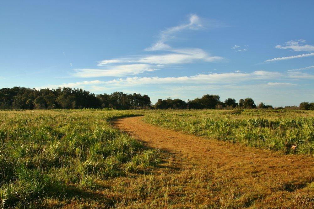 Transition from Barber Hammock into dry prairie.JPG