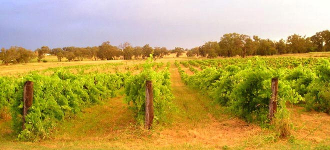 Bell River Estate Wines Nosh Exhibitor Narrabri