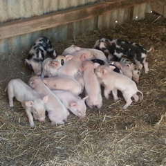 PeKa Farm