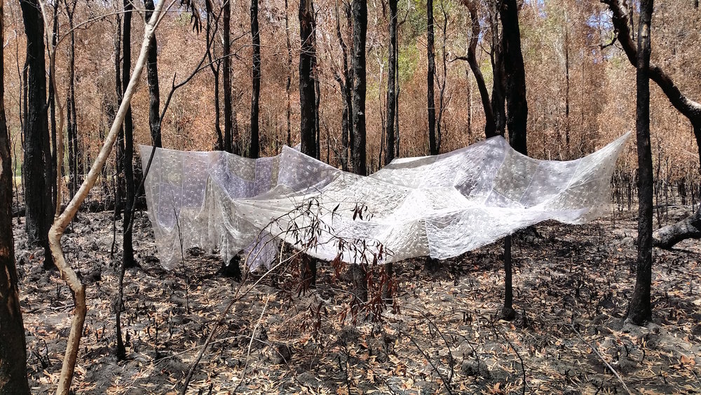 following the December 2016 fires, near water mouse wetlands, Canaipa Island. (Photograph by Anna Niblik Heggie)