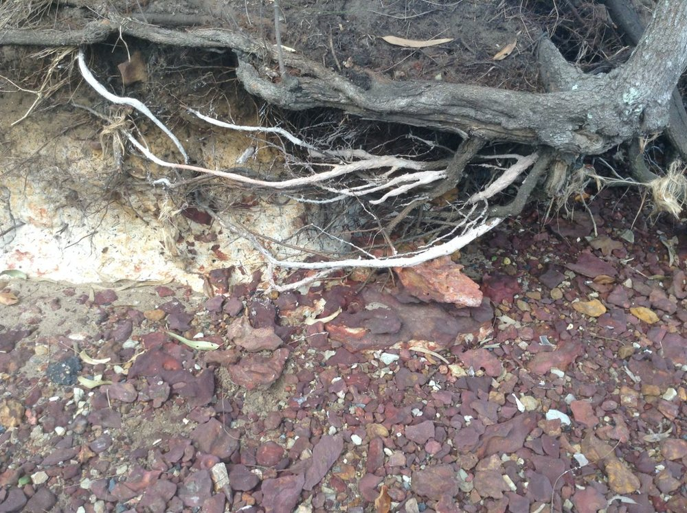 Clay and roots