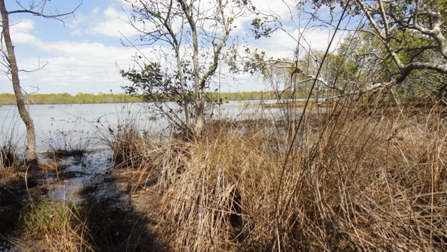 Melomys wetlands, looking south across the tidal shallows