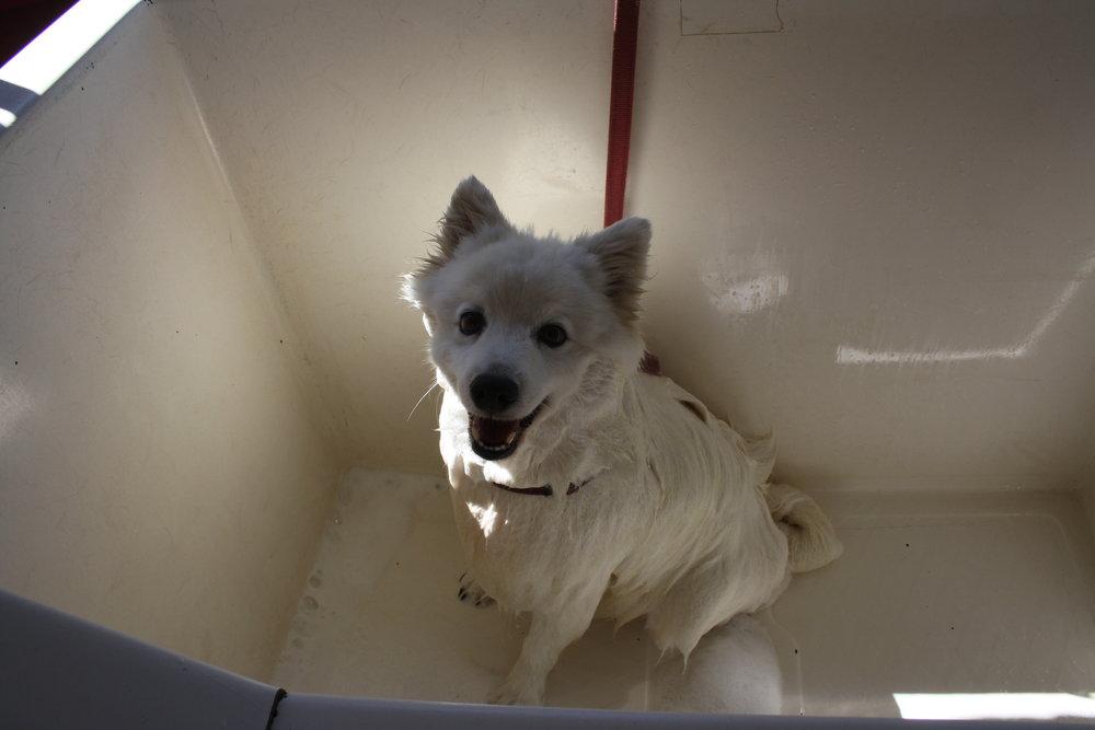 Dog grooming north shore sydney