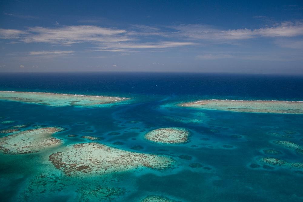 Astrum_Reef_165.jpg