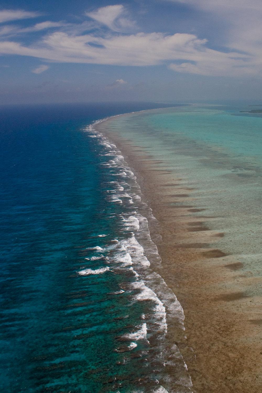 Astrum_Reef_297.jpg