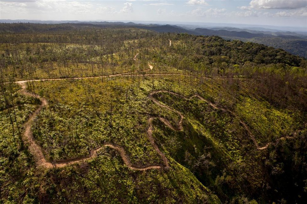 Pine Ridge Forest Reserve 1 (Large).jpg