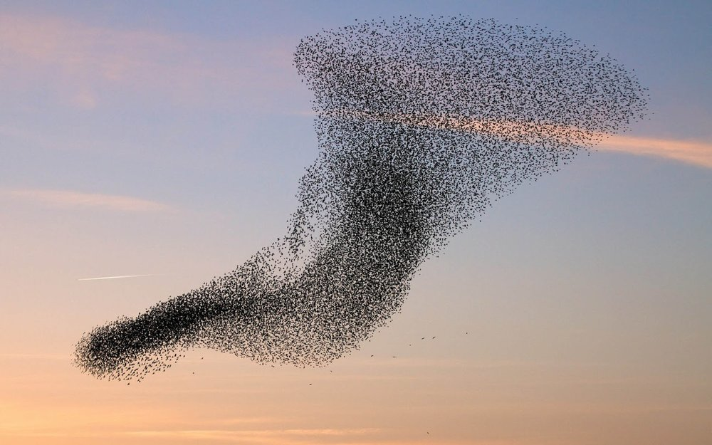 Birds flocking together. Source