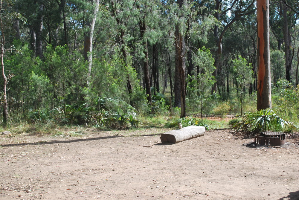 Camping at Blackdowns Tableland.JPG