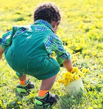 little-boy-in-dandelions-756434_640.jpg