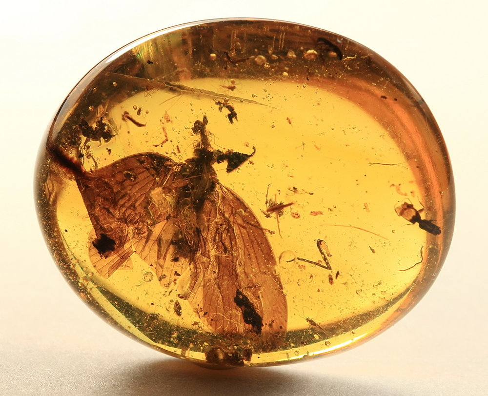 Amber with Moth