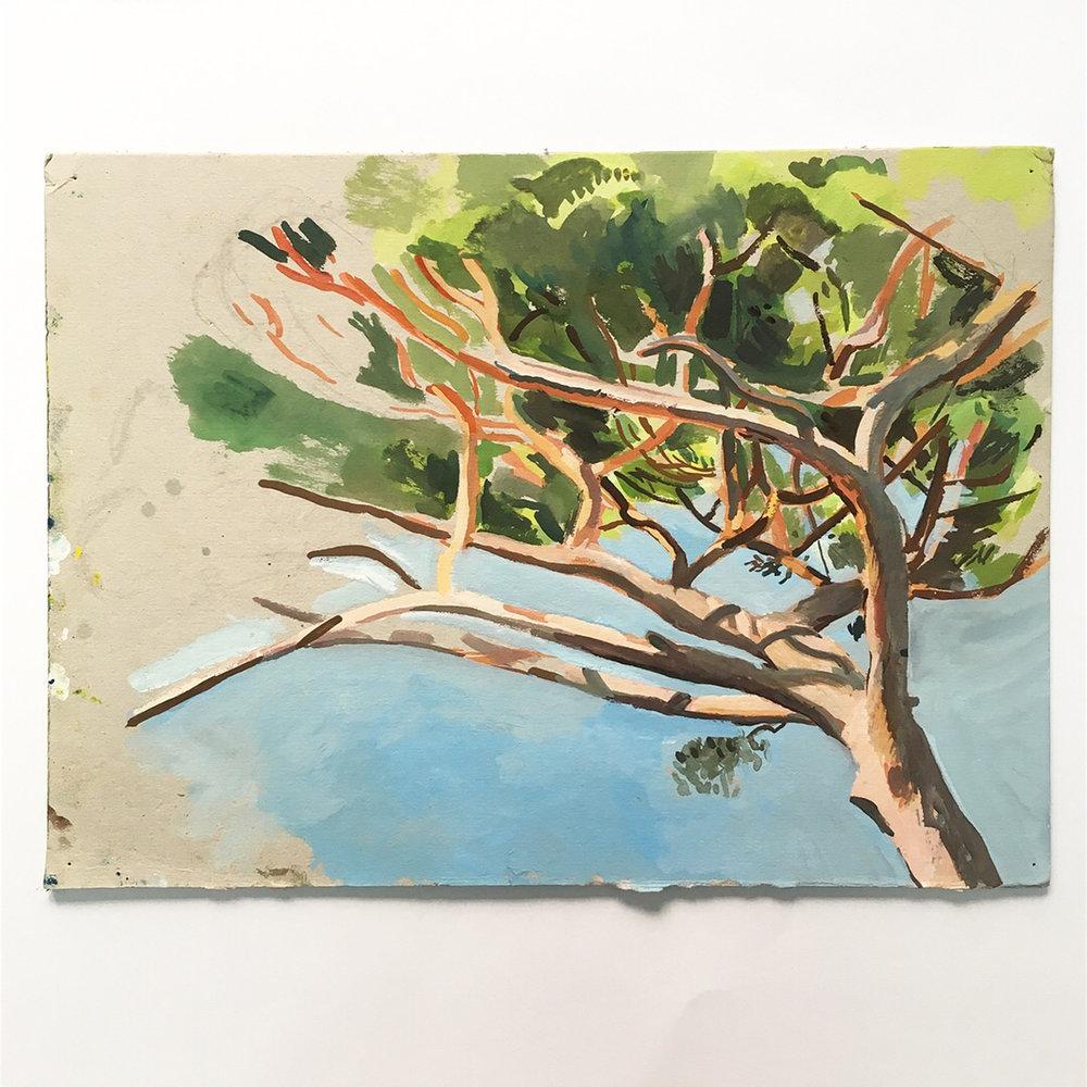 Matthieu Cossé,  Étude de pin I , 2016. Gouache sur carton, 33,5 cm x 24,5 cm