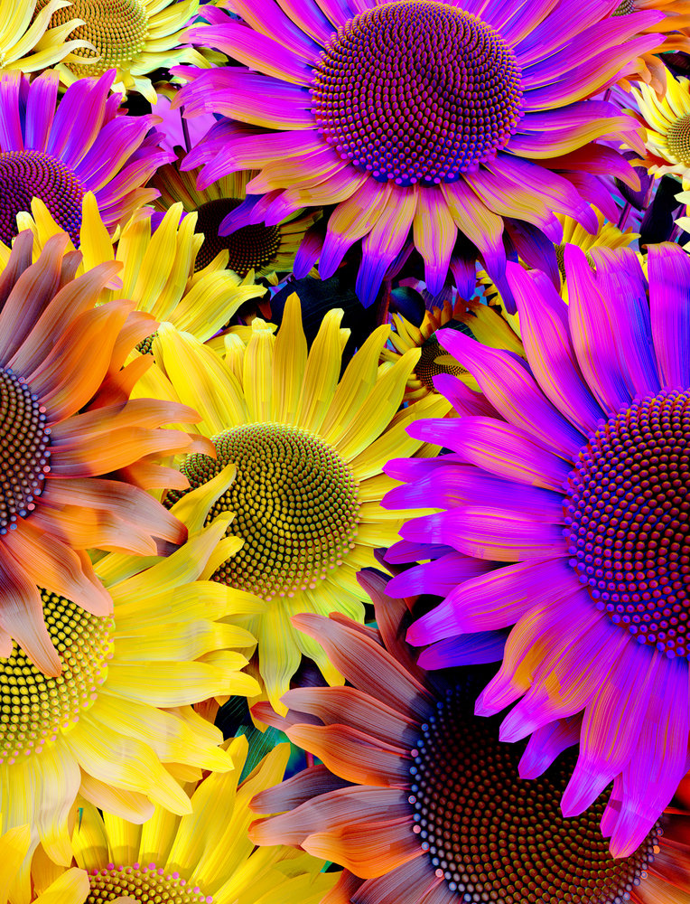256985-Sunflower_letitgrow_web-75b8e2-large-1503924625.jpg