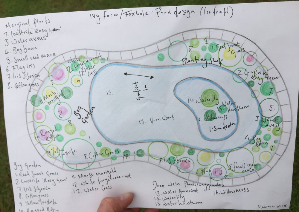 First level design for a very large pond in Saxlingham Nethergate, Norfolk.