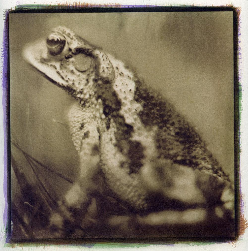 Toad No. 2, 2014