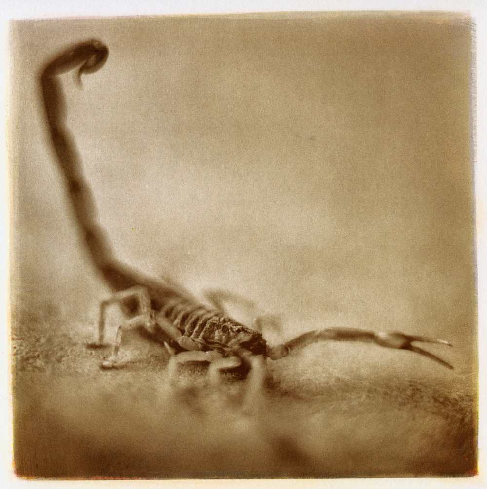 Scorpion, 2014