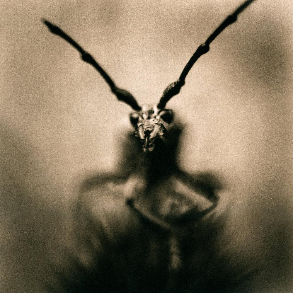 Longhorn Beetle, 2011