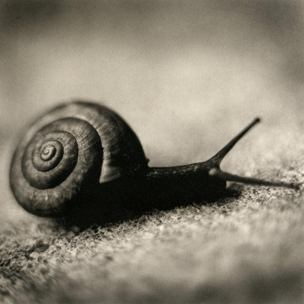 Snail, 2005