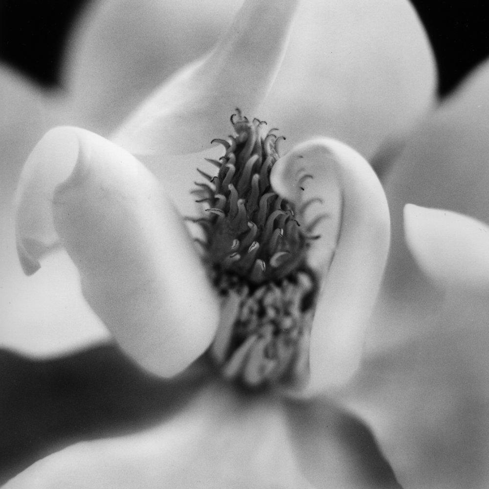 Magnolia, 2010