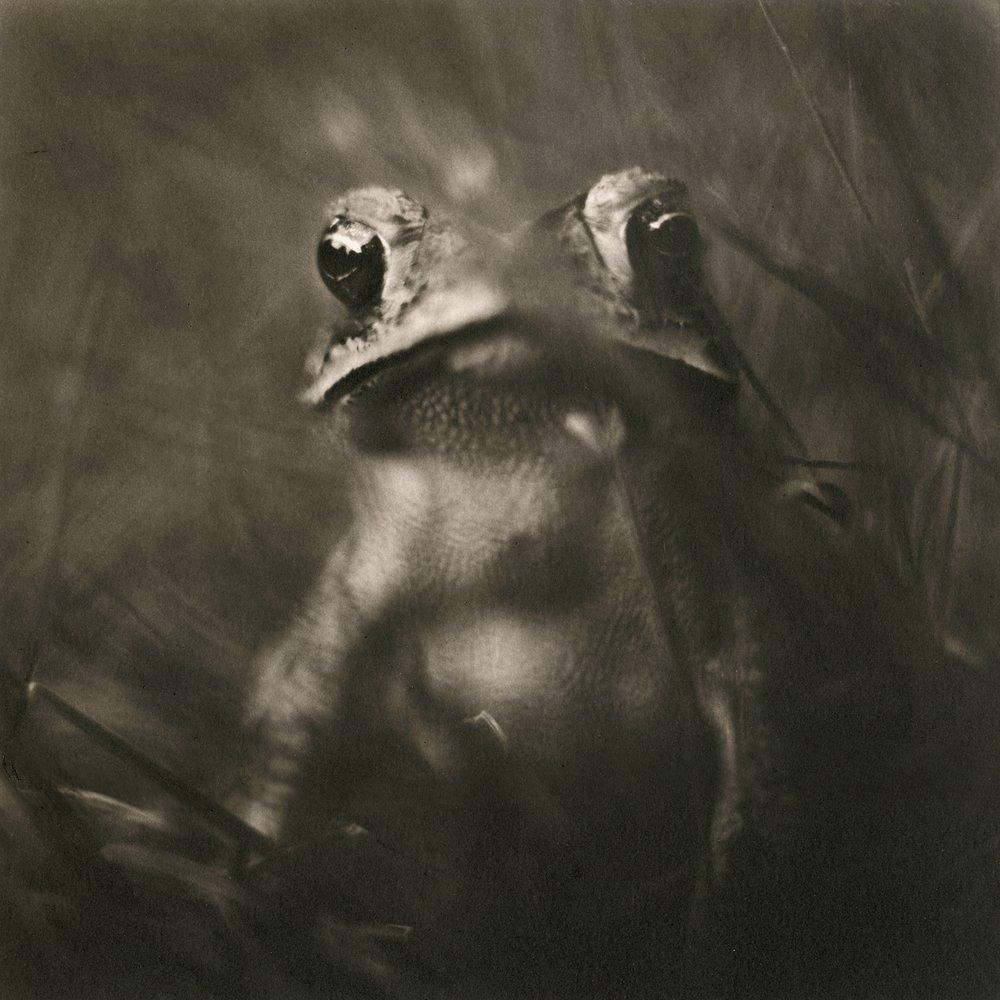 toad,2004.jpg
