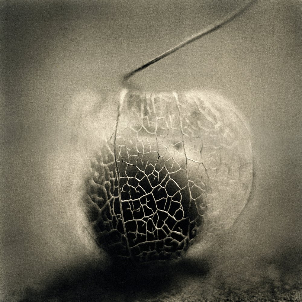 Ground Cherry, 2015