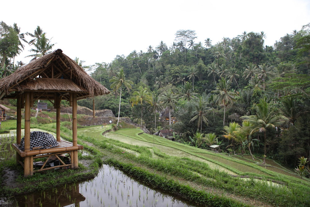 Bali+Indonesia Season: May or September   explore temples / go snorkeling / relax on the beach / swim in waterfalls / visit the monkey forest / lounge in spas / climb a volcano / experience / scooter tour / ceremonial dances / hang with the locals