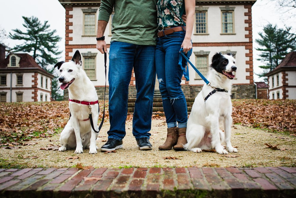 Strawberry Mansion - Family Photoshoot with Dogs-3.jpg