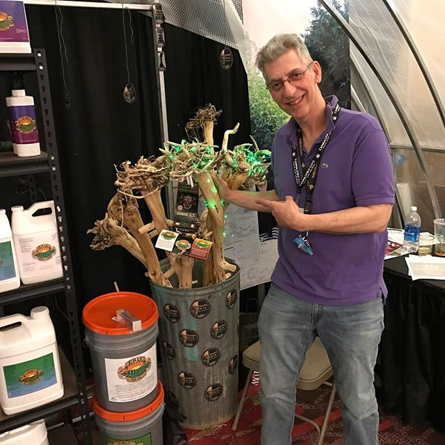 Check these cannabis stalks out!!!! @elementxx. Check them out. #crohnsdisease #rollyourbong #growerslove #weedgeezer #cannagrowexpo