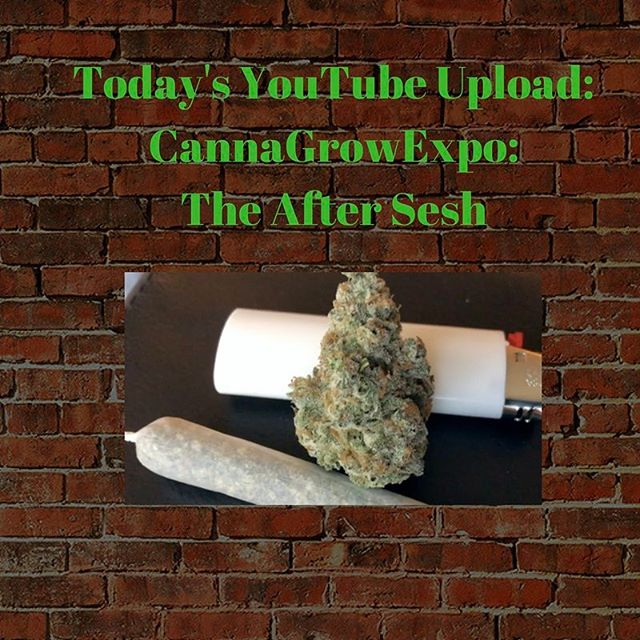 Please check out today's YouTube upload where we proceed to smoke up the hotel room bigly. @sunycheba @debbarella @homegrownnaturalwonders @geekfarms @geekmike @jonhudnall @prince.elton