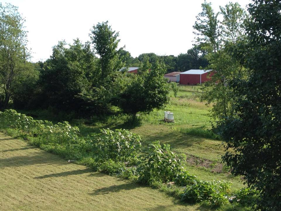 As I often do, I forgot to take pictures of the brush before everything was cut down. So ...  here's a picture of what the area looked like a couple summers ago. Photo taken from our second-story window -- and check out that amazing garden we had!