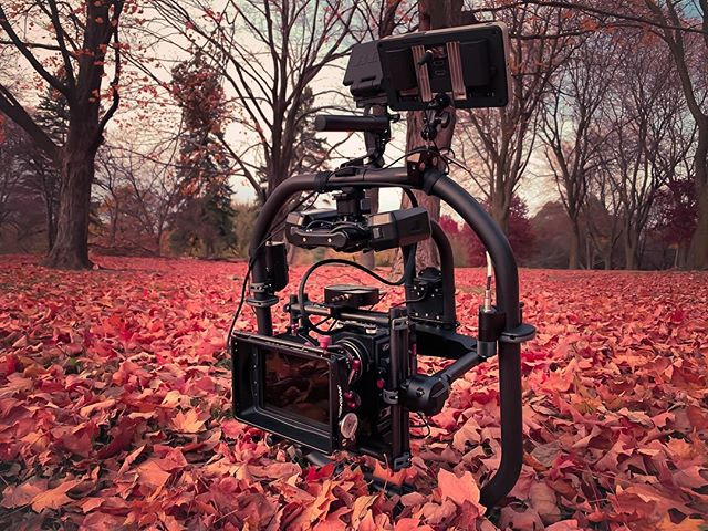Red on red #freeflysystems #movipro #redcinema #redraven #fall #leaves
