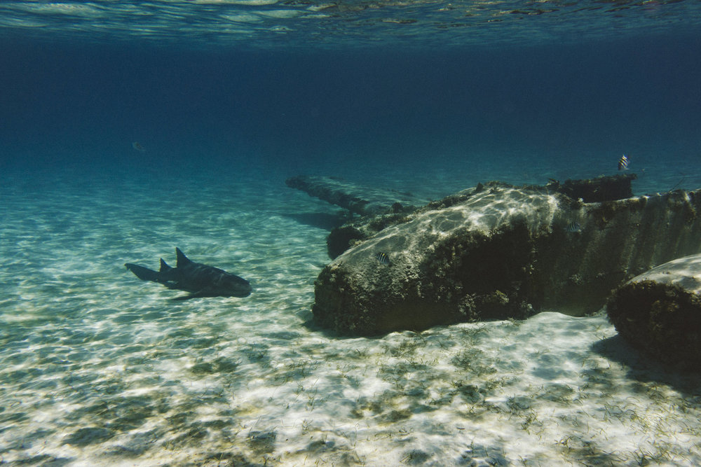 Plane wreckage and a nurse shark
