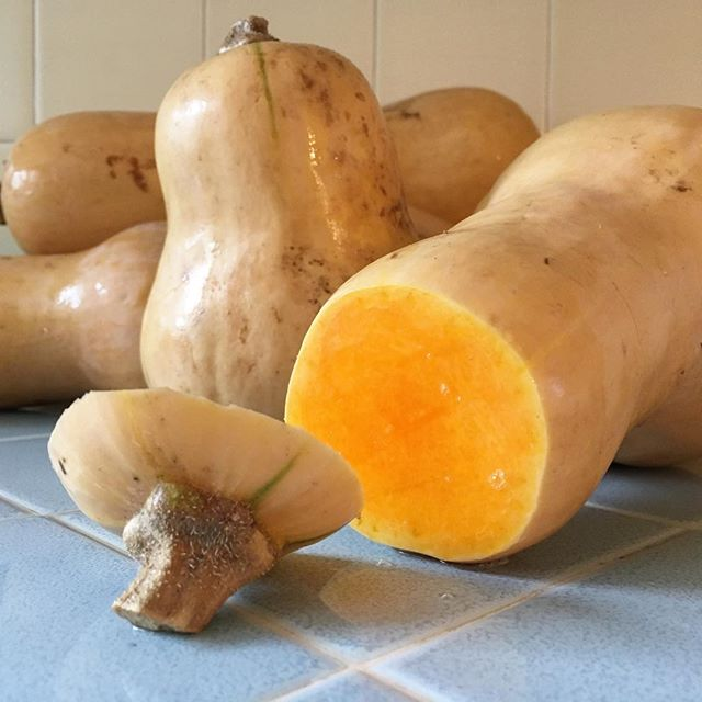 Getting ready to attack this huge pile of #butternutsquash from @eatwellfarm