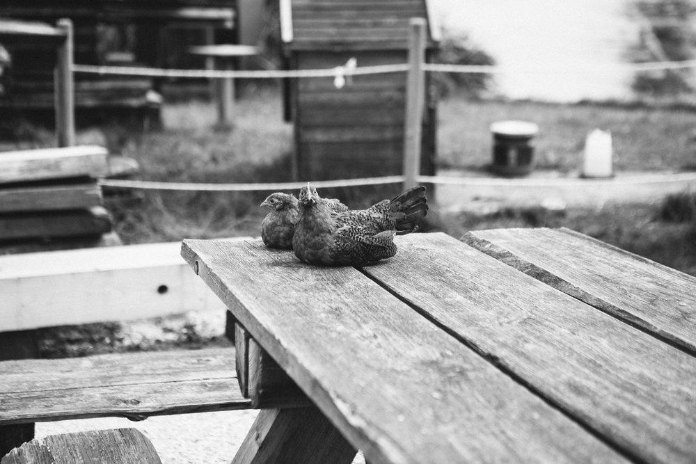 Dutch Hens Volendam Toronto Food Travel Photographers - Suech and Beck