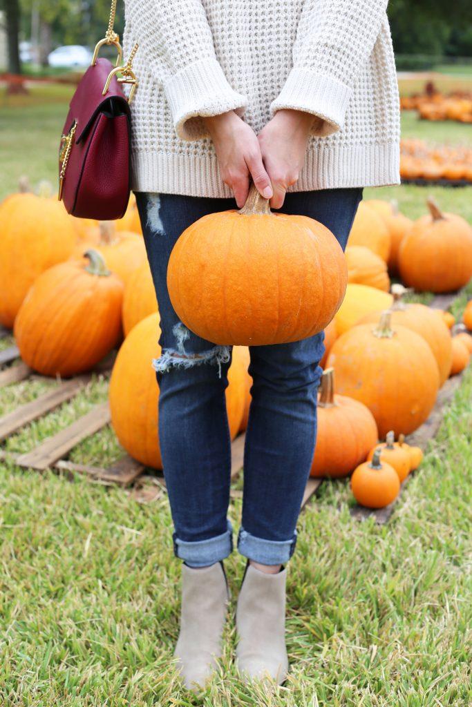 pumpkin10-683x1024.jpg
