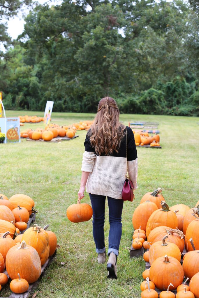 pumpkin15-683x1024.jpg