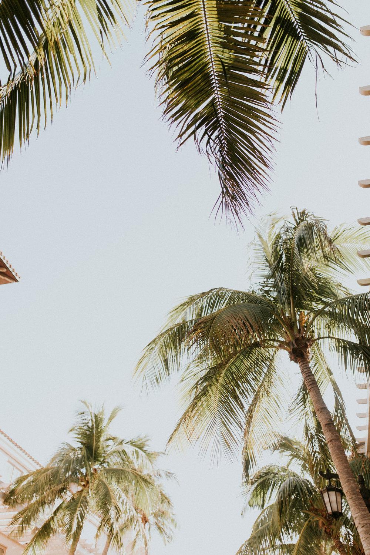 palmbeach71.jpg