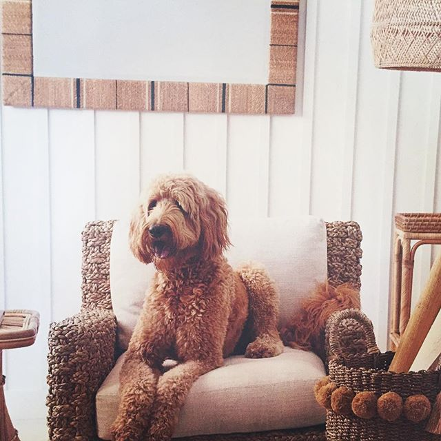 Happy Monday!  There isn't a single thing we don't love about this pic in the latest @Serena&Lily catalog, but for sure doodle steals the show😜#doodledogs #serenaandlilystyle #coolwall#interiordesign #blackdoorinteriors