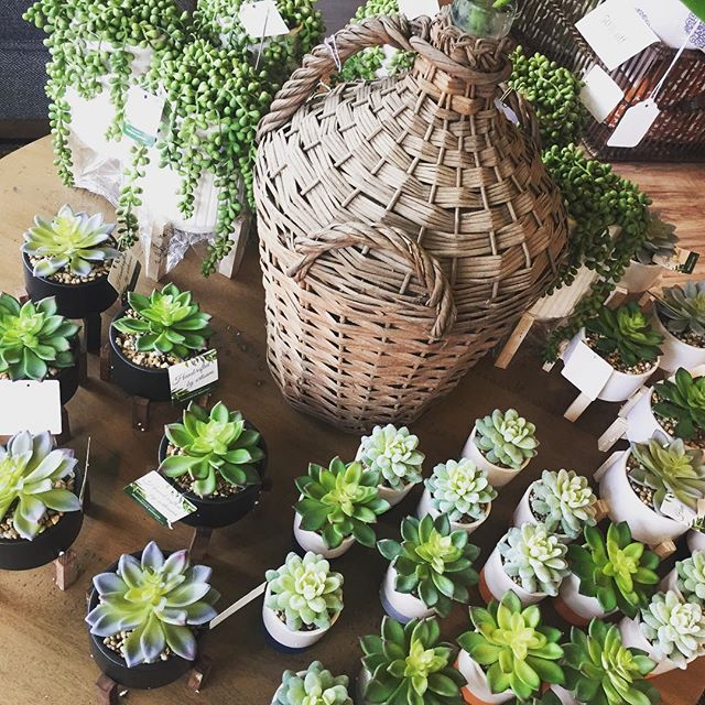 Needing to fill a space on a shelf or counter with something awesome?  New decorative accessories at the shop this  weekend come visit and bring a friend🤗#greenery #succulents #decor #accessories #springtime🌸 #shoplocal #interiordesign #blackdoorinteriors