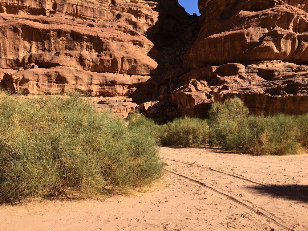 Wadi Rum - khazali RS - 2.jpg