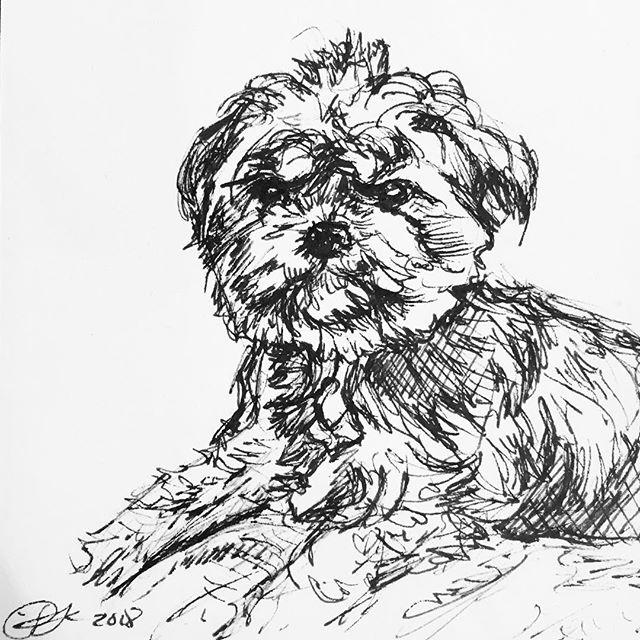 Pups. #pups #terrier #inktober #inkdrawing #sketch