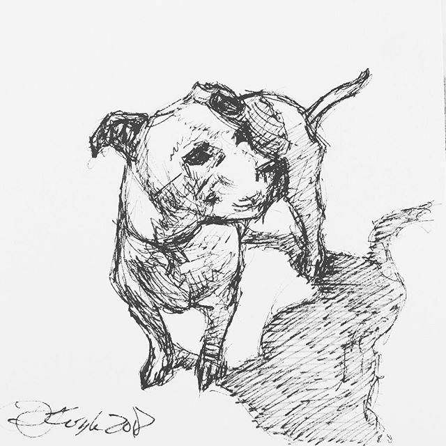 Pup. #pitbull #sketch #drawing #inktober #ink #pen