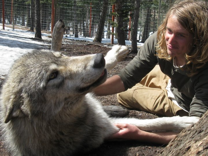 Shunka Wolf Roll.jpg