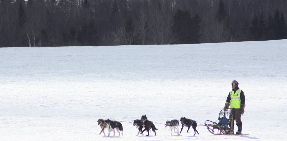 Dog sledding cropped.jpeg