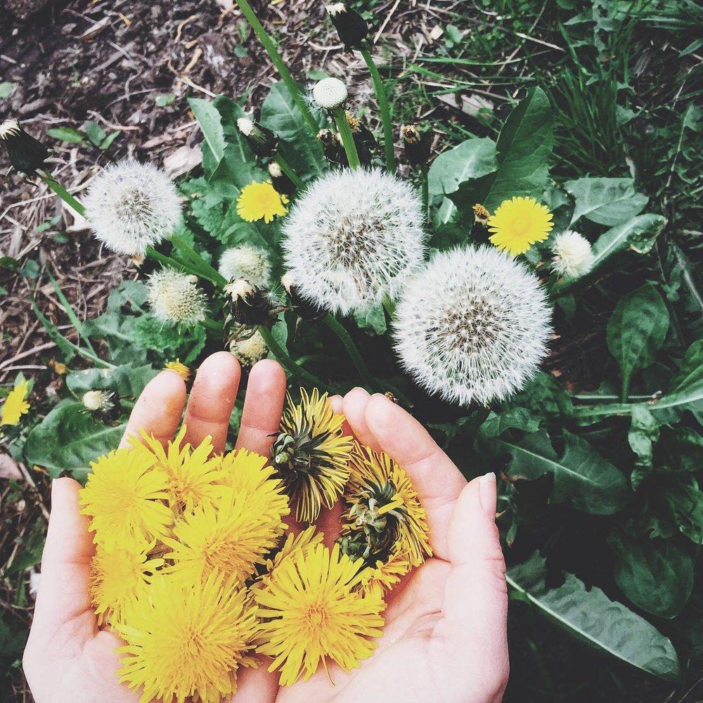 Wildflower Beauty Oil
