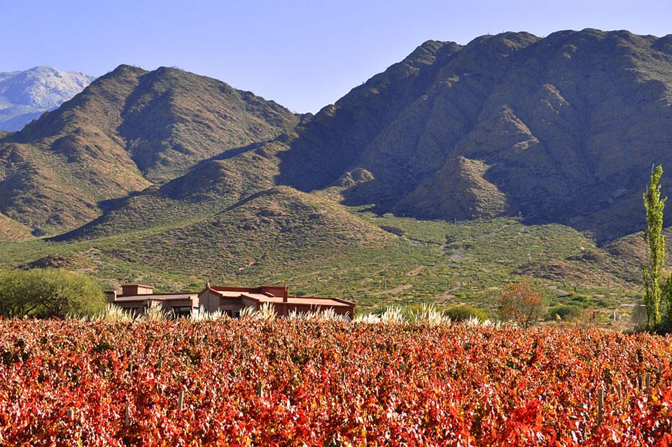 miraluna-winery.jpg