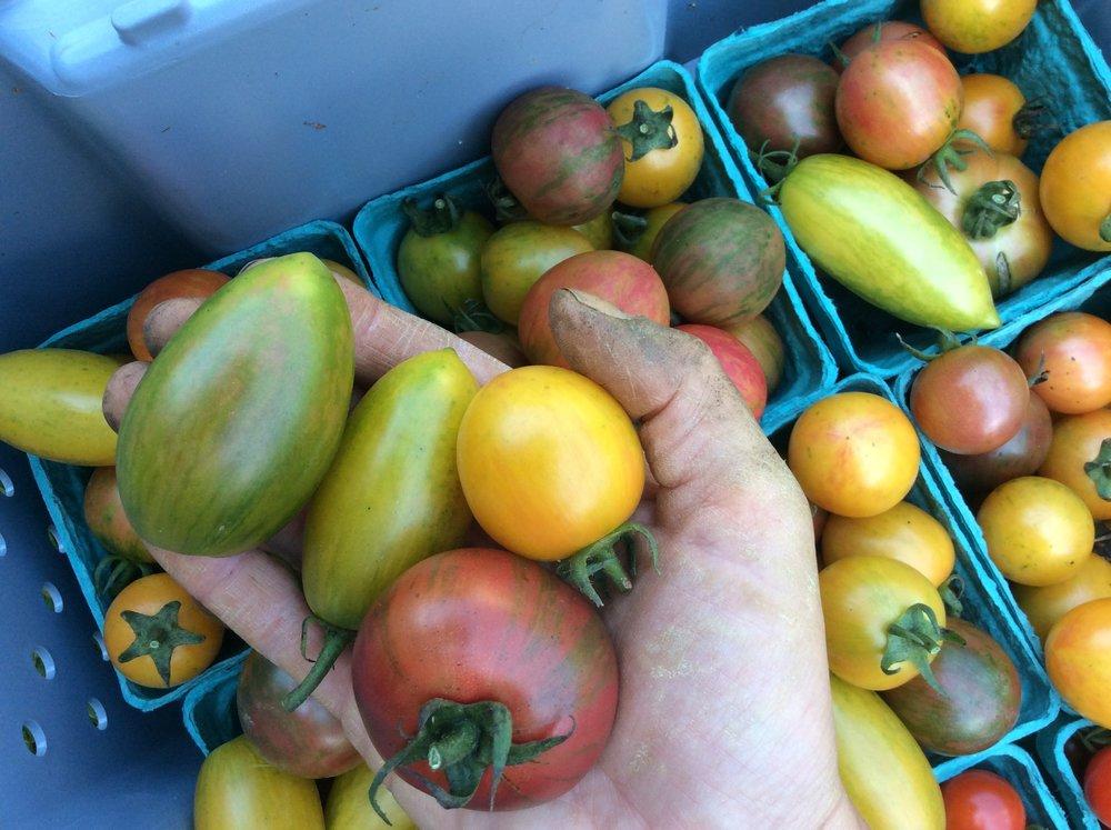 artisan tomatoes.jpg
