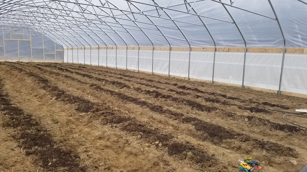 We have eight raised beds in the big high tunnel. We shoveled these by hand because the walking tractor wouldn't have been able to squeeze that many rows in this space. That's mushroom compost spread on the rows.