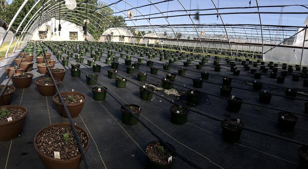 Greenhouse #3 - 2017