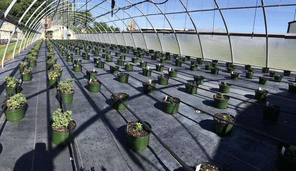 Greenhouse #5 - 2017